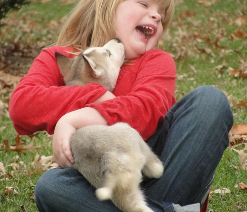 Filhotes de cachorros 24
