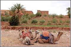 Morocco (Marco Di Leo) Tags: africa morocco maroc marocco marruecos zagora marokko marrocos fas marocko marokas marokkó maroko المغرب モロッコ מרוקו 摩洛哥 maghribi maroka مراکش марокко 모로코 мароко marokk μαρόκο maroku मोरक्को मोराको מאראקא मोरोक्को марока ประเทศโมร็อกโก მაროკო մարոկկո загора মরোক্কো ሞሮኮ མོ་རོ་ཁོ། ܡܓܪܒ মরক্কো maruwekos ಮೊರಾಕೊ മൊറോക്കൊ ମୋରୋକ୍କୋ ਮੋਰਾਕੋ марокаш மொரோக்கோ marokash mòrókò زكورة zaghura
