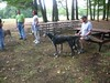 GreyhoundPlanetDay2008012