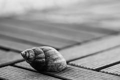 (Siam_K) Tags: bw pen blackwhite bokeh shell snail olympus 45mm m43 mft flickrandroidapp:filter=none olympusepl5