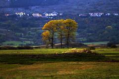 Parco Regionale Sirente Velino (vanto5 (Antonio Vaccarini)) Tags: trip travel italien autumn trees italy automne landscape italia herbst explore otoo autunno italie abruzzo laquila canonef24105mmf4lisusm altopianodellerocche roccadicambio canoneos7d parcoregionalesirentevelino