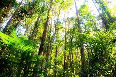 green (szuweichungszuweichung) Tags: life green canon mt taiwan 2013 60d  colorvibefilter