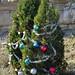 Trees_of_Loop_360_2013_289