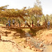 019_2012_Ethiopia_Bridge_Implementation_007