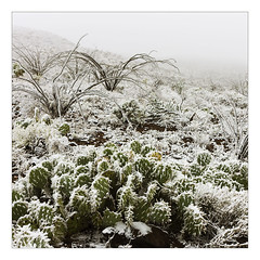 Early Freeze (AnEyeForTexas) Tags: ice freeze chihuahuandesert bigbendranchstatepark womter