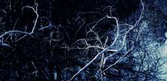 laketousle (LauraSorrells) Tags: november blue favorite lake painterly water kentucky branches deep ethereal wetlands exploration tangle 2012 otherworldly gethsemani colorplay domfredericslake