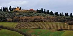 Campagna toscana (luporosso) Tags: naturaleza nature nikon country natura campagna tuscany toscana vino naturalmente vigna cipressi nikond300s
