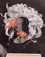vrouwenportret (maartje jaquet) Tags: plant flower collage paper wonder glue books scissors wonderwoman magazines papier boeken oldmagazines oldbooks schaar wonderwomen lijm tijdschriften fatalflower