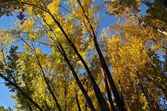 IMG_0442 (berserker170) Tags: arbol otoño puertopeña puerto peña river rio hoja leaf eos 7d canon fall autumn tree extremadura flickrexploreme