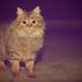 Le Visiteur du soir - The Cat by Night