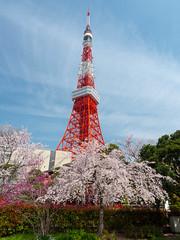 P1330921.jpg (Rambalac) Tags: flowers plant tower japan tokyo sakura tokyotower minato башня цветы сакура япония растение токио lumixgh3 токийскаябашня