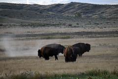 American Prairie Reserve 1