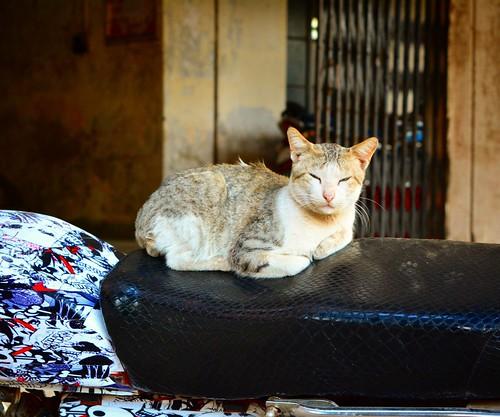Lazy cat..