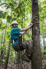 """Director Colin Crilley Getting into position while filming for """"Cornell Costa Rica Tree Climbing"""" - January 2013 (tenacityinpursuit) Tags: coe ctci centralamerica colincrilley costarica treeclimbing"""