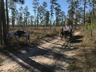 Georgia Mule Drawn Quail Hunt 21