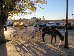 Horse feeding, with buggy near Bab Moulay Ismail, Meknes, Morocco (Paul McClure DC) Tags: meknes meknès morocco almaghrib jan2017 animals horse architecture historic