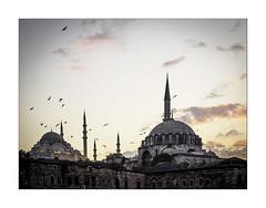 Istanbul (jen 3163) Tags: istanbul turkey city skyline sunset birds sky mosque minarets