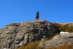 kilátótorony / belvedere (debreczeniemoke) Tags: tavasz spring rozsály gutin gutinhegység gutinmountains szikla rock kutya dog frakk olympusem5