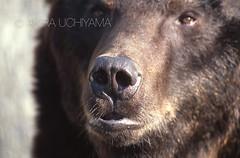 ZOO0204 (Akira Uchiyama) Tags: 動物たちのいろいろ 鼻 鼻ヒグマ