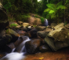 Buderim Forest Falls (Elephas_a) Tags: australia buderim buderimforestpark qld queensland sunshinecoast autumn bushes falls fern foliage forest green hinterlands longexposure movingwater peaceful pool rocks serenity serenityfalls water waterfall watescape au