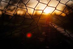 faerie (ewitsoe) Tags: poland hff happyfencefriday friday erikwitsoe ewitsoe polska dawn sunrise sun autumn spring monring sunset sunny light flare fenced chickenwire wire coop metal landscape