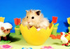 Happy Easter! ~ Gucio (pyza*) Tags: gucio bubu hamster hammie syrian syrianhamster animal pet rodent critter furry fluffy easter egg holidays spring pyza