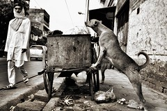 Streetphotography, India (paola ambrosecchia) Tags: india kolkata street bnw blackandwhite dog man light streetphotography city citylife asia amazing biancoenero ngc