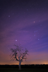 Orion - Le Grand Chien - 20170327 (frankastro) Tags: orion sirius arbre astronomy astronomie astrophotography