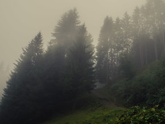 Misty Kleinwalsertal (Netsrak) Tags: alpen alps berg berge kleinwalsertal nebel fog mist mountain mountains way path weg pfad riezlern vorarlberg österreich at nature natur landscape landschaft summer sommer europe europa