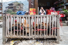 Datang girl and chickens (10b travelling) Tags: 10btravelling 2016 asia asie asien carstentenbrink china chine chinese datang guizhou iptcbasic leishan miao prc peoplesrepublicofchina qiandongnan southwest cage chickens cockerel girl hens province shop southernchina tenbrink village 中华人民共和国 中国
