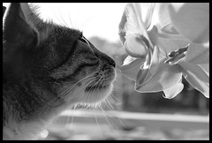 Eva & The orchids (fdlscrmn) Tags: pet bw flower 7dwf cats blossoms bloom mono friends