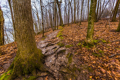 Hike along the Mississippi - Frontenac State Park (Tony Webster) Tags: frontenac frontenacstatepark lakepepin minnesota mississippiriver earlyspring forest leaves spring statepark trees unitedstates us