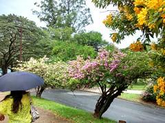 São Paulo - Brasil - Parque Ibirapuera (raffsalvetti) Tags: cores natureza cidade sãopaulo brasil brazil colors flores flower parque park ibirapuera