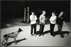 group and dog