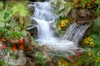 Ulatis Creek (SolanoSnapper) Tags: ulatiscreek redlarkspur delphiniumnudicaule fiddlenecks amsinckia solanocounty vacaville northerncalifornia theawardtree netartii