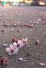 pentax k-70 (Lonewolf 829) Tags: flower plumflower sunset petals bokh macro pentaxk70 pentax