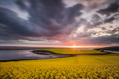 Spring Colour (Chrissphotos) Tags: rapeseed field yellow sunset oil flowers spring light clouds mood moody dorset england uk canon 5dsr 1635lii awaitinggame leefilters hard soft nd grad solid