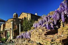 Tempio di Romolo (giannipiras555) Tags: roma tempio fororomano fiori colonne chiesa
