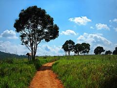 Khao Yai National Park (dainty_diana) Tags: attractions destination park nationalpark mountain animals heritagesite