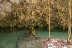 Tulum Pet Cemetary Cenote cave-12