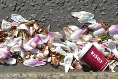 Flood St. 25mar17 (richardbw9) Tags: london uk rbkc chelsea royalborough kensingtonchelsea kingsroad pink city street urban londonstreetphotography stilllife spring floodstreet petals rubbish trash discarded cup coffeecup costa garbage litter gutter kerb tarmac