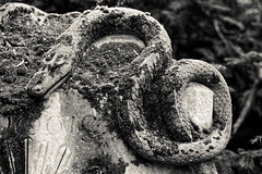 Samyang f1.4 85mm Test Drive (I bass therefore I am) Tags: köln cologne samyang k3 cemetery friedhof dxooptixpro
