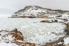 Portugal Cove (Karen_Chappell) Tags: ice sea ocean seascape landscape scenery scenic portugalcove newfoundland nfld avalonpeninsula atlanticcanada atlantic spring cold cove icy