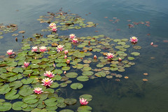 Springtime at the Chinese Garden. (LisaDiazPhotos) Tags: lisadiazphotos h huntington library san marino nature springtime chinese garden