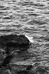 IMG_1239_1 (Pablo Alvarez Corredera) Tags: xixon gijon mar orilla puerto rocas roca blanco negro