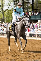 Coming Back (Casey Laughter Media) Tags: horse racehorse horses thoroughbred keeneland lexington kentucky birdsong horseracing gallop