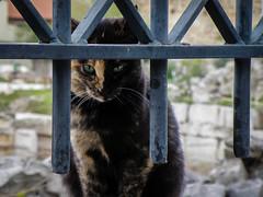 Why So Serious? (Tassos Giannouris) Tags: athens cat animals greece monastiraki black brown eyes standing