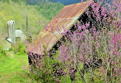 ~ Some Mountain Charm, Upon The Farm .....    HTT (~ Cindy~) Tags: mountains redbuds trees barns silo farms rusted county morgan tennessee petros 2017