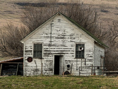 Pine Coulee Reservoir trip (annkelliott) Tags: alberta canada swofnanton pinecouleereservoirtrip building barn shed old weathered white greenroof tree trees grass field filterinpostprocessing outdoor 22april2017 fz200 fz2004 annkelliott anneelliott ©anneelliott2017 ©allrightsreserved