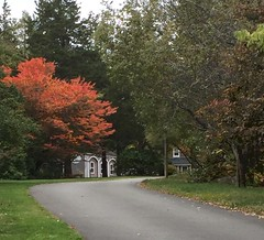 Bright Tree at Long Hill (Posterized Photo) (randubnick) Tags: art photograph referencephotoforpainting gatehouse longhill october autumn fall